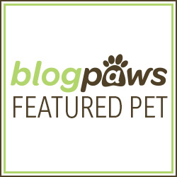 BlogPaws March Community Member Featured Pet